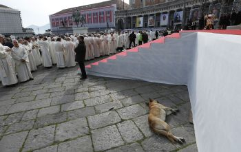 A stray dog rests near the altar prior to Pope Francis' Mass in Piazza Plebiscito in Naples, Italy, March 21. (CNS photo/Paul Haring)