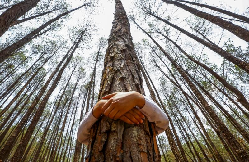 A Nepalese youth hugs a tree in the forest of Gokarna in Nepal. (CNS photo/Narendra Shestha, EPA)