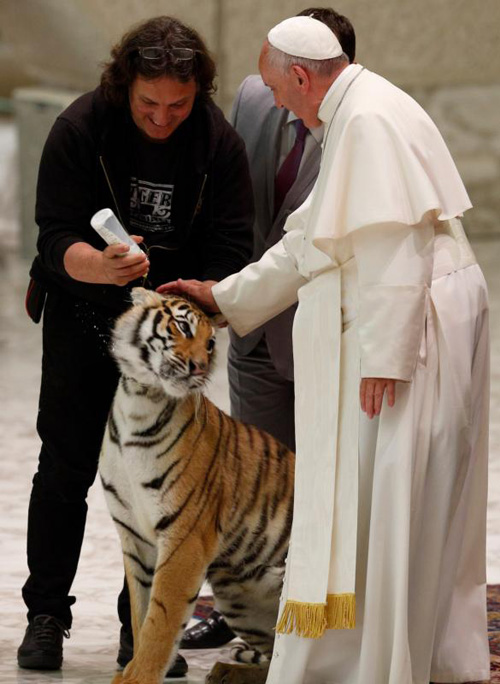 Pope Francis pets a tiger during an audience with circus members in Paul VI hall at the Vatican June 16. (CNS photo/Paul Haring)