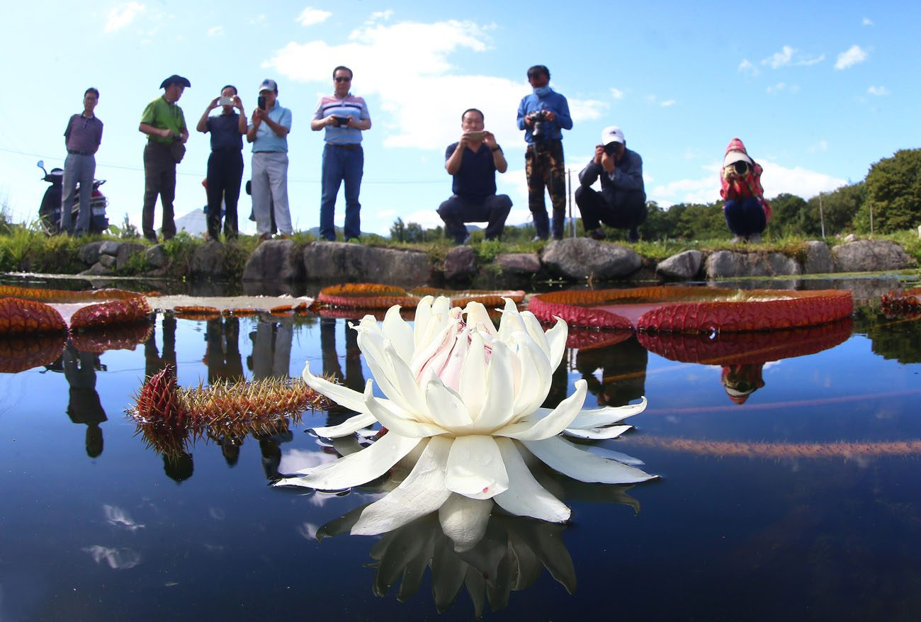 Tourists take pictures of a lotus flower in Hamyang, South Korea, Aug. 29. Pope Francis said religions can play an important role in protecting the environment and defending human rights in their countries, their communities and their schools. (CNS photo/YONHAP via EPA)