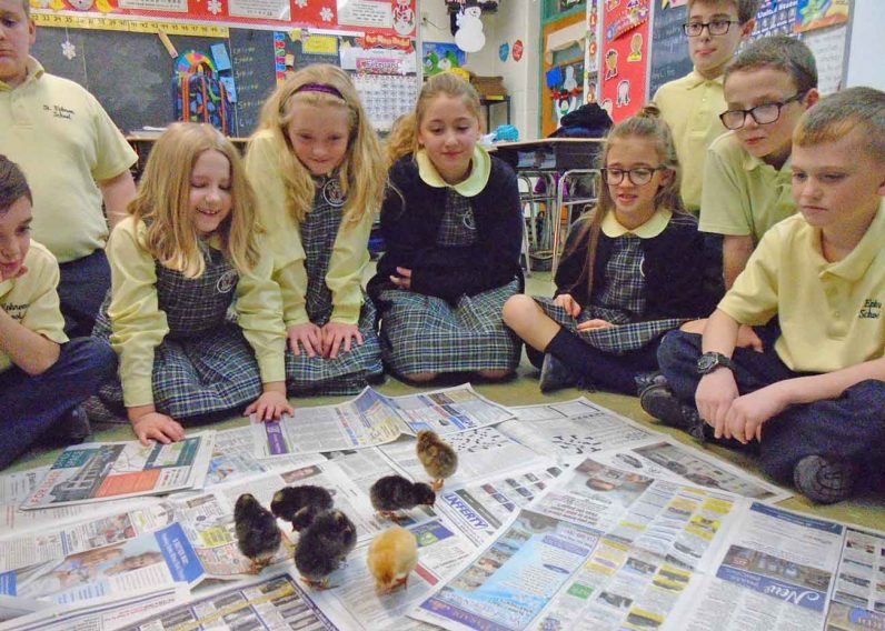 The children admire they chicks hatched under their care in the classroom.