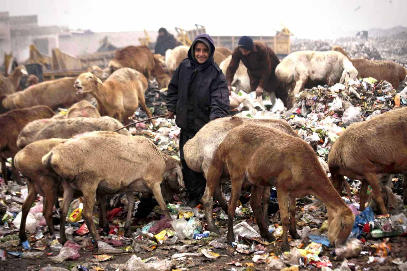 A shepherd herds goats on a roadside in Peshawar, Pakistan, Jan. 19. Archbishop Bernardito Auza, the Vatican's permanent observer to the United Nations, called on countries Feb. 6 to seek solutions to poverty based not only on economics but to also address personal, social and environmental factors that contribute to it. (CNS photo/Arshad Arbab, EPA)