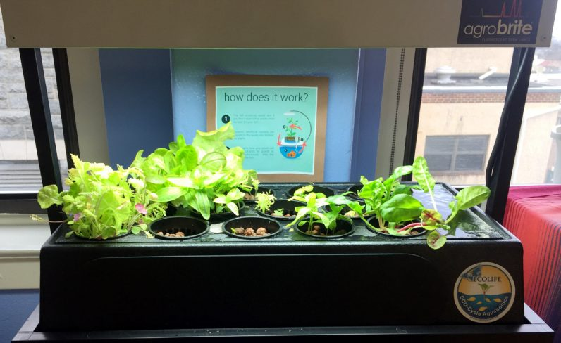 St. Agnes School's presentation of growing lettuce plants.