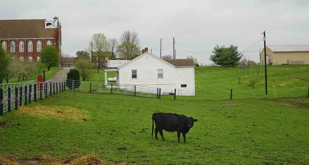 A cow grazes in a pasture on St. Catharine Farm April 6 in Kentucky near the motherhouse of the Dominican Sisters of Peace at left. (CNS photo/Jessica Able, The Record)